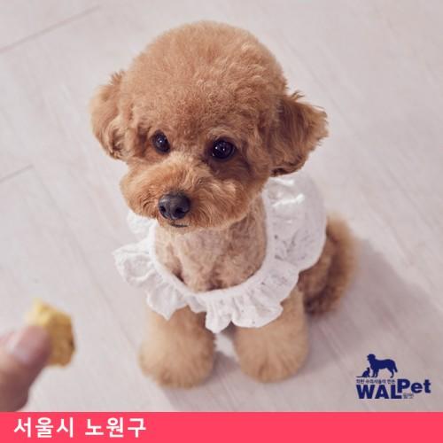 반려견 · 반려묘 자궁축농증 [우리들 동물종합병원]