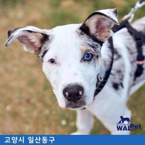강아지·고양이 중성화 [웰니스동물병원 고양점]